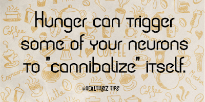 "Hunger can trigger some of your neurons to ""cannibalize"" itself."