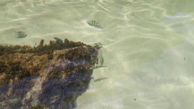 tipos de peixes que tem na ilha das couves