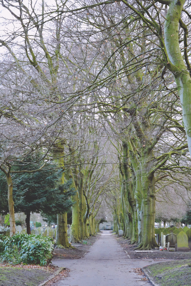 Tree lined avenue cemetery