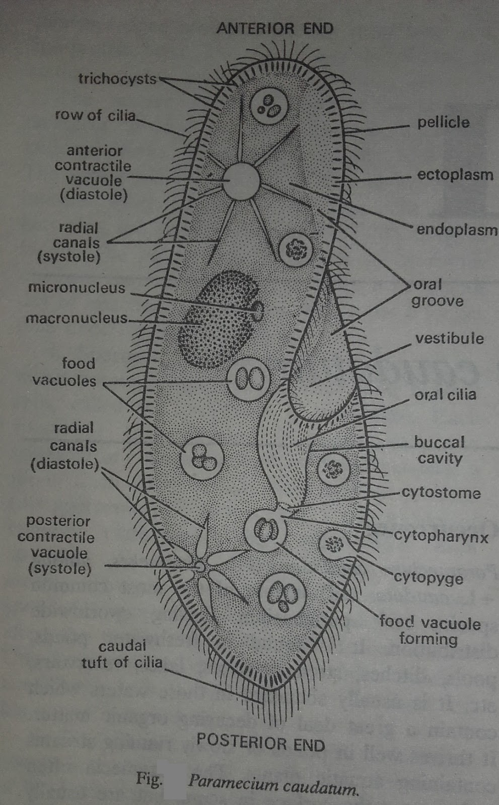 hight resolution of internal structure