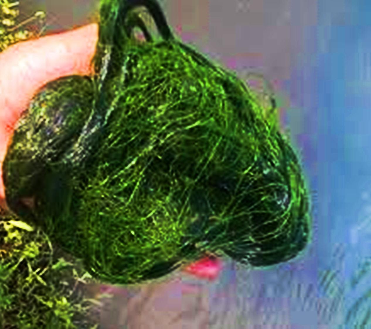 Hobbyku Berburu Ikan Nila Liar Dengan Umpan Lumut