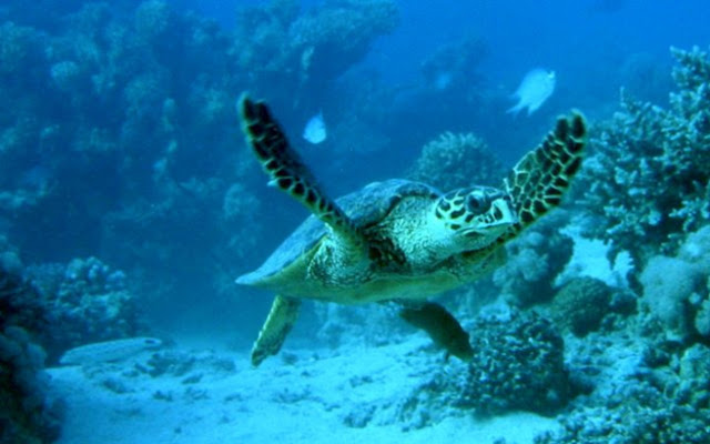 A hopeful comeback for endangered sea turtles and seals in Greece