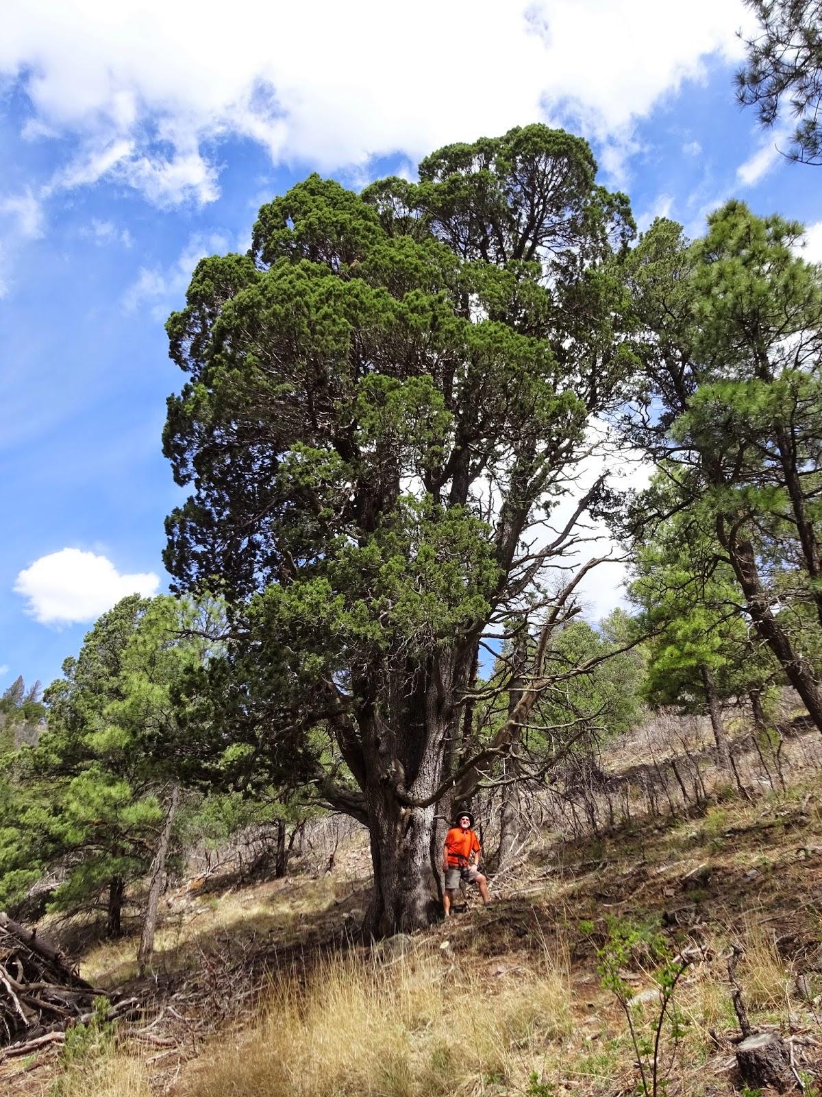 Metamorphosis Road Ruidoso Nm A Return To Pine Forest
