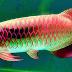 15 Fakta Menarik Tentang Ikan Yang Belum Kamu Ketahui