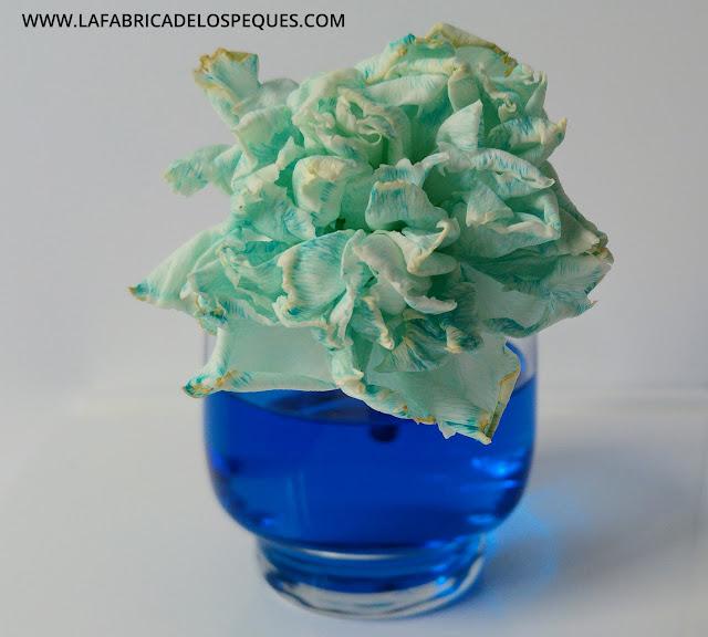 Experimento plantas agua colorante alimentario