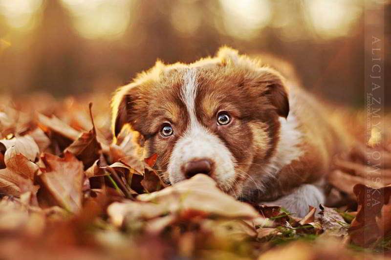dog-photography-alicja-zmyslowska-08