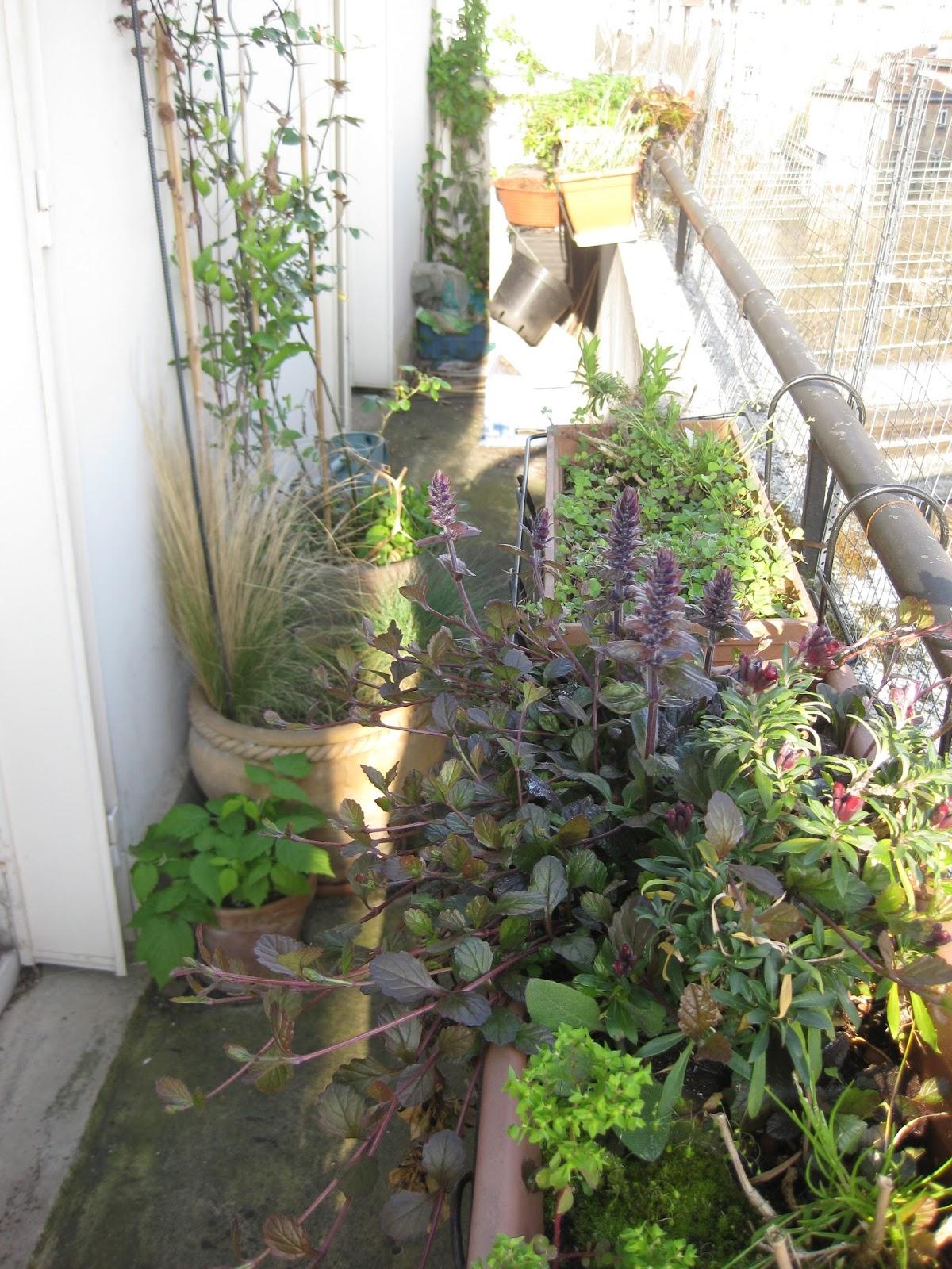 Du froufrou dans les feuilles mon jardin de balcon - Les jardins de passiflore ...