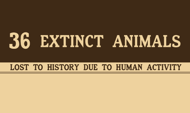 These 36 Animals Went Extinct Because of Humans