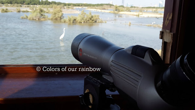 Ras al Khor Wild life Sanctuary and Zabeel Palace Gardens: Flamingos and Peacocks : @http://colorsofourrainbow.blogspot.ae/