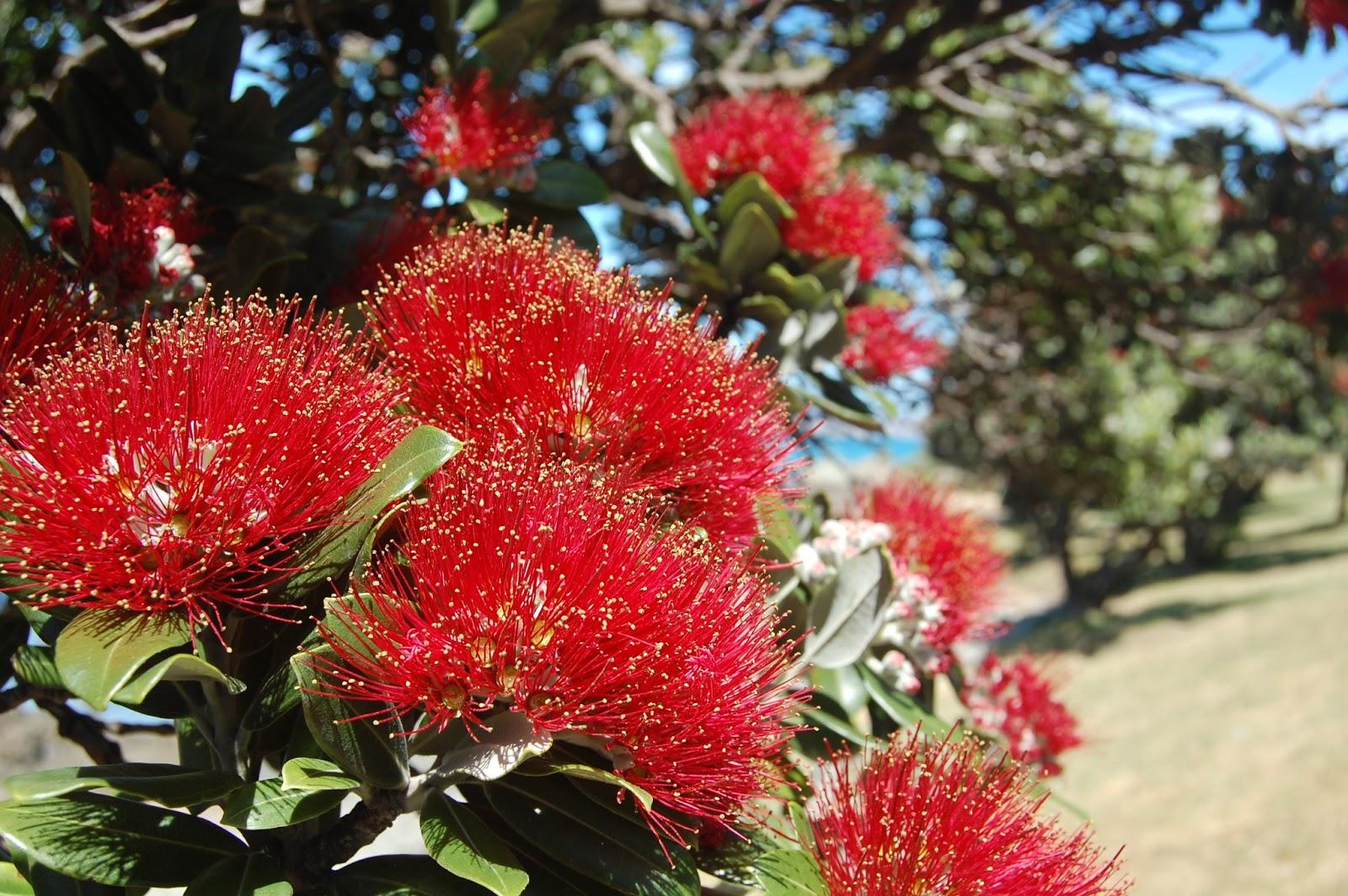 Happy New Zealand: Beautiful Trees