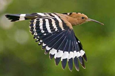 أجمل طيور العالم