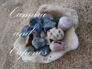 CAMARA AND CAPONES ADVENTURE