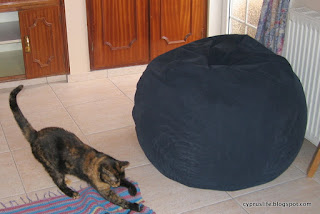 new blue beanbag, the cat Sophia in the room