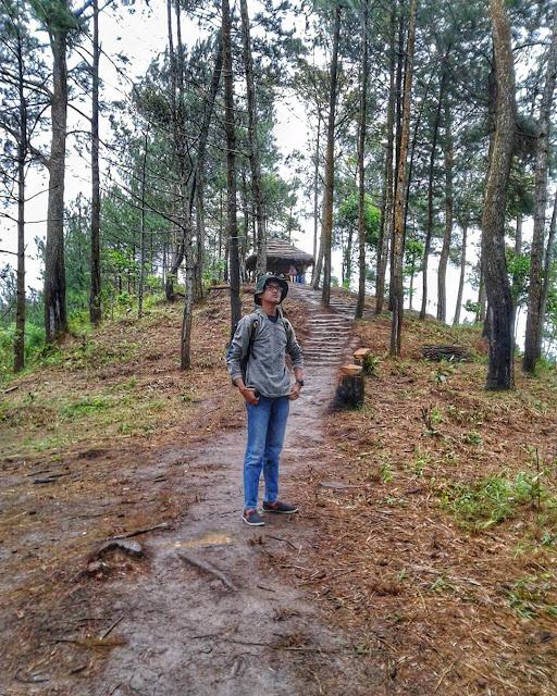 hutan pinus di rumah pohon pabangbon