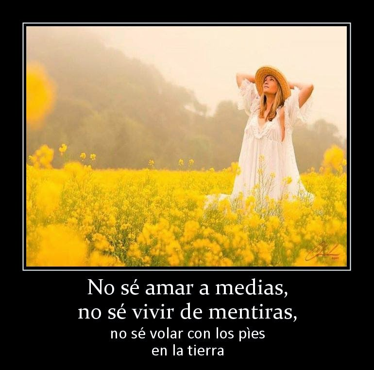 No Se Amar A Medias No Se Frases De Amor Solo Amor Fondos Hd