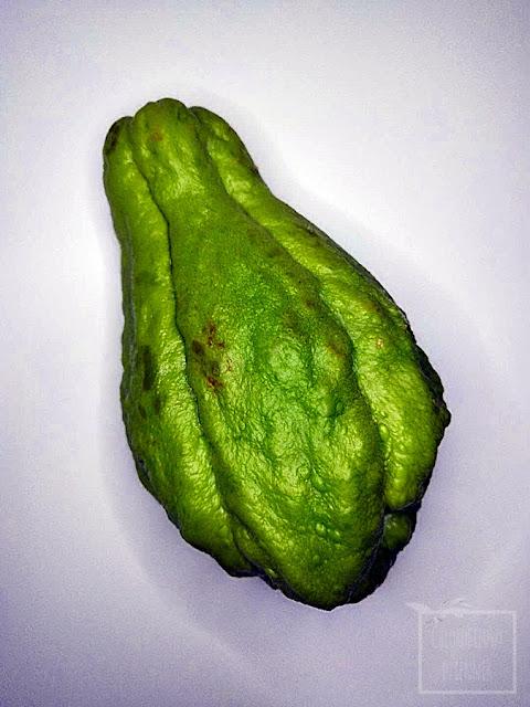 Kolczoch jadalny (Sechium edule), chayote. Dziwne, ciekawe warzywa, egzotyczne rośliny uprawne, ciekawostki botaniczne do uprawy w ogródku, na działce, w szklarni, mało znane pnącza, kolczaste warzywo, jak wysiać kolczocha, smak, opis, uprawa, pielęgnacja, rozmnażanie