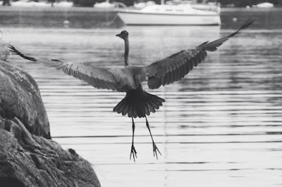 Seaside with heron flying