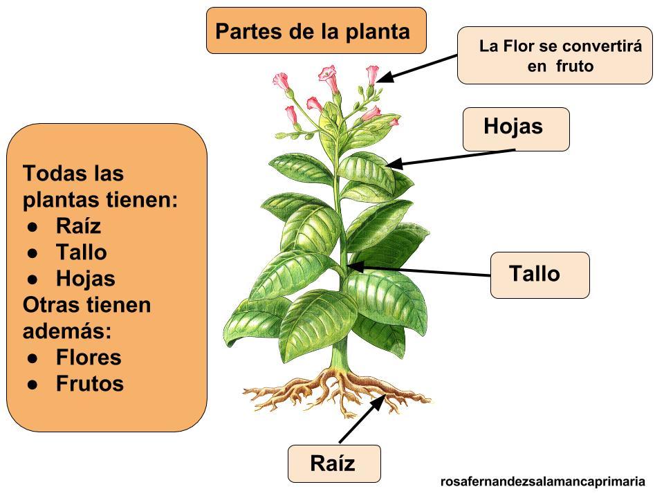 Hermosa Hoja Para Colorear De Plantas Galería - Dibujos Para ...