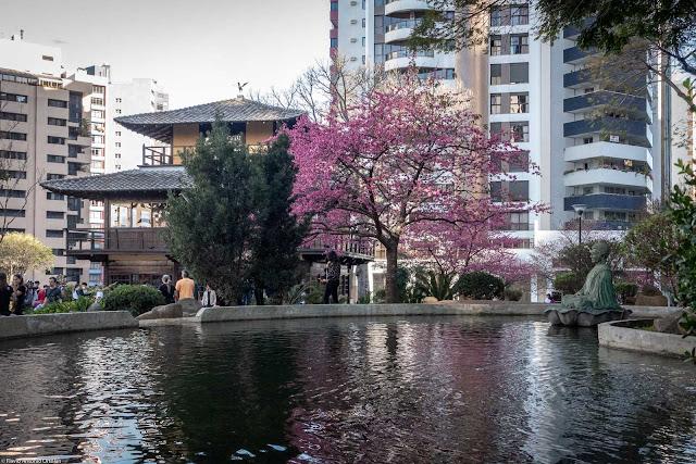 As cerejeiras na Praça do Japão