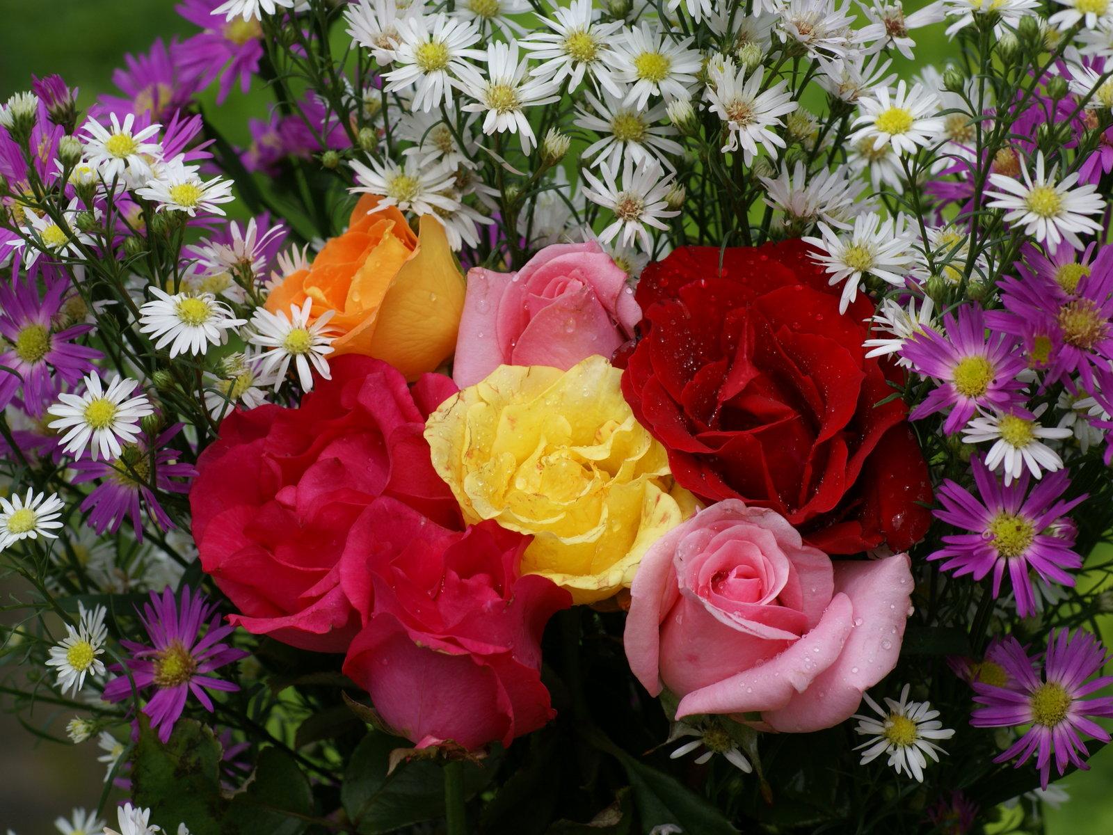 Imagenes de las rosas mas bonitas - Flores mas bonitas ...