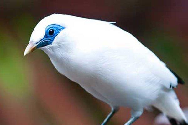 Rasulullah Sebut Salah Satu Ciri Penghuni Surga Adalah Berhati Seperti Burung, Ini Maksudnya