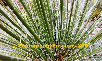 http://www.photographypassions.xyz/2016/03/wellington-botanic-gardens-some-shrubs.html