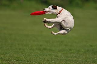 los mejores juegos para perros