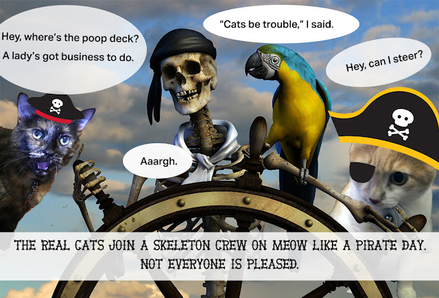 The Real Cats join a pirate ship with a skeleton crew