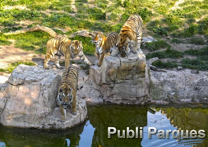 Tigres de Terra Natura Benidorm