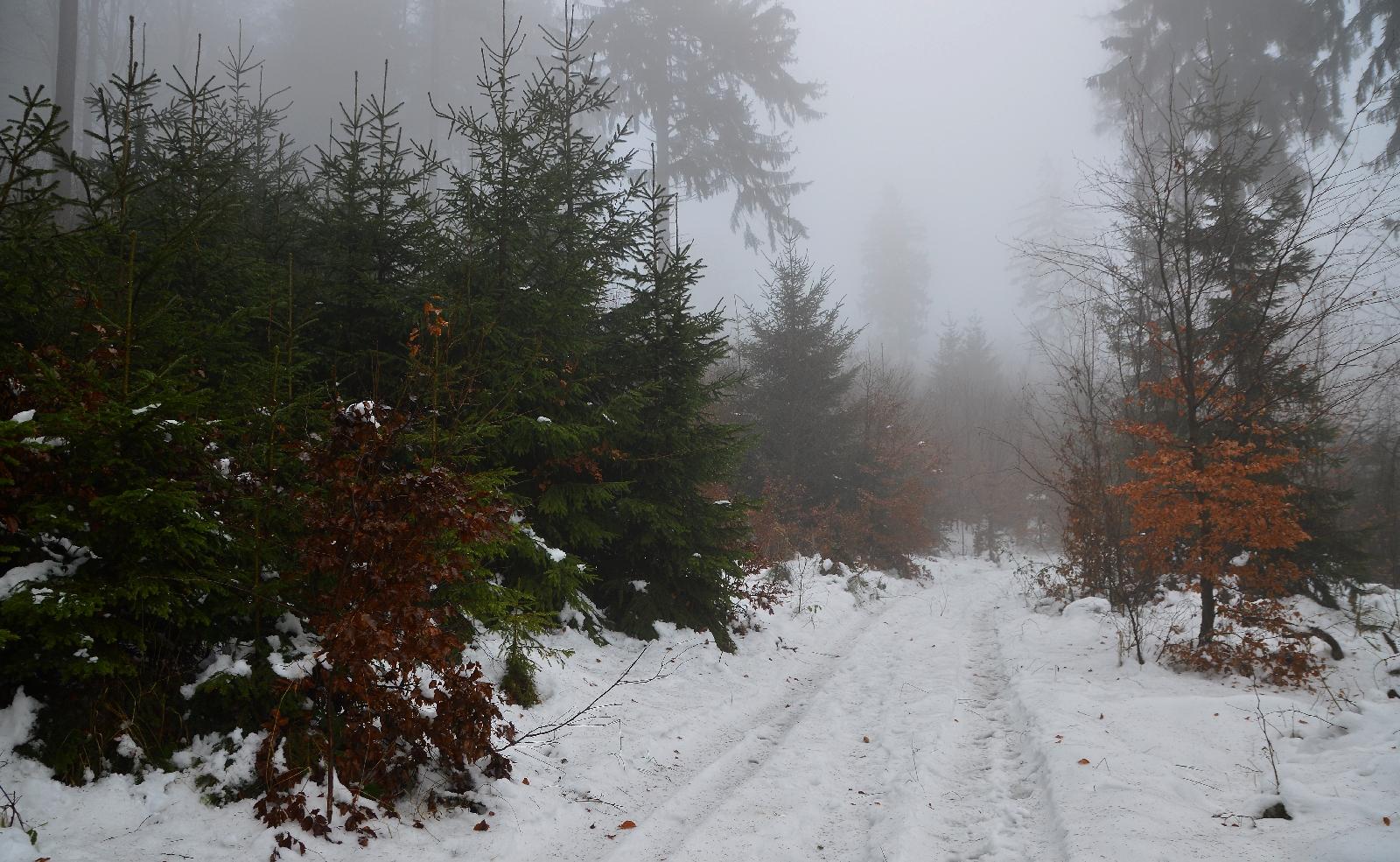 Góry Bardzkie - Sudety Środkowe - Szlak na Kłodzką Górę