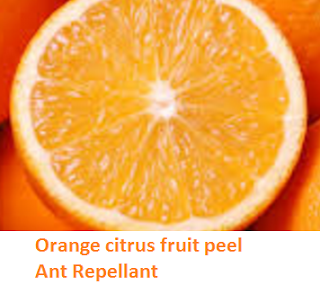 Orange citrus fruit peel Ant Repellant - Oranges citrus fruit peel (Santre Ke Chilke)