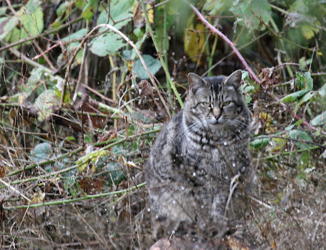 A cat that is invisible, on the fringe of even feral cat society