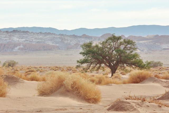 Ayllu de Coyo, no Deserto do Atacama