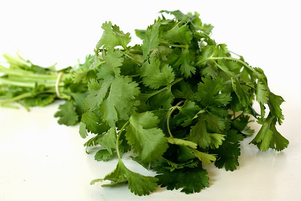 New Research Shows Cilantro can Remove Lead, Copper, Mercury from Tap Water