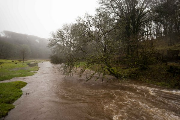 The River Barle in flood at Simonsbath. Photo copyright B. Adams (All Rights Reserved)