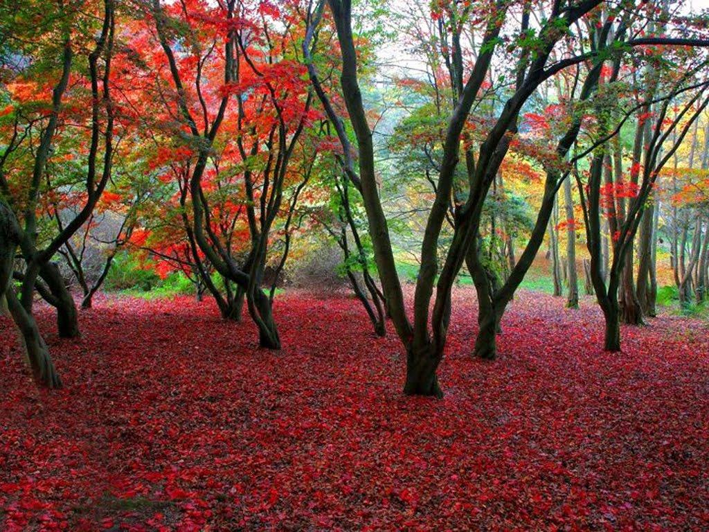 Beautiful Spring Scene : Nature ~ Artline : Feel The Creation!