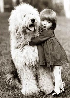 Old English Sheepdog hug. Fluffiness