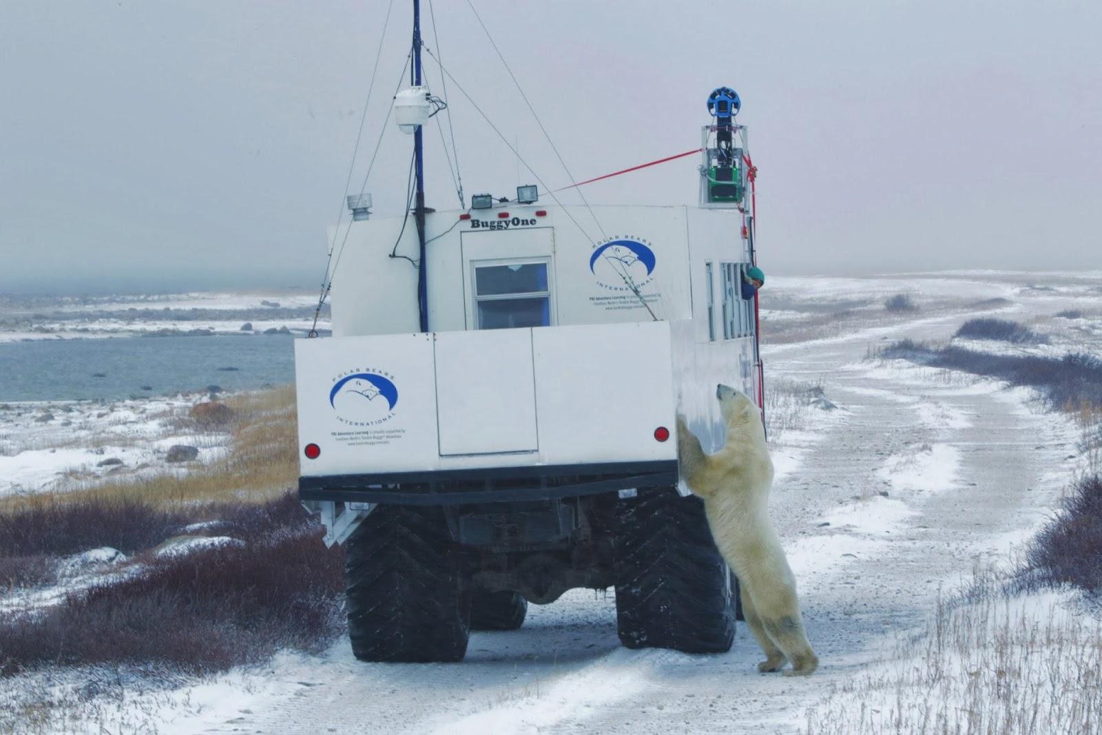 A la découverte des ours polaires avec Google Maps