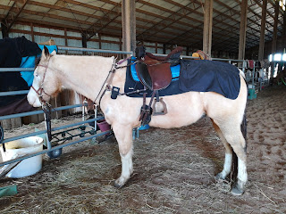 Trekker Luxus, Treeless Saddle Review, PSSM horse tack