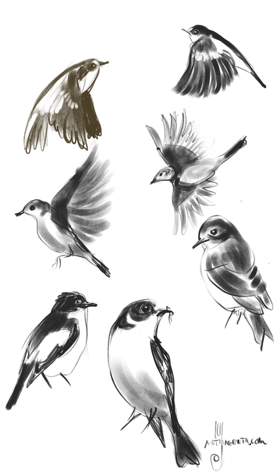 Birds: Pied Flycatcher