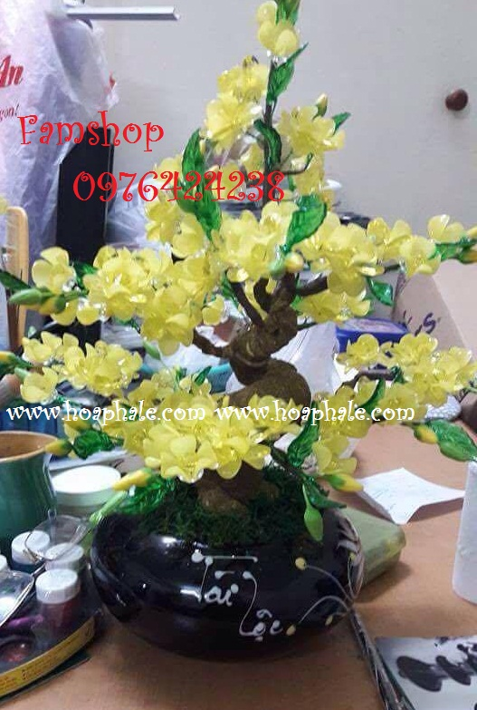 Goc bonsai cay hoa mai o Nguyen Thi Dinh