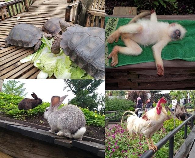 farm-house-susu-lembang16