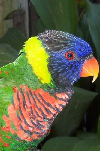How to take care of Parrots? 4-Steps Detailed and Easy Guide on How to care for a Parrot