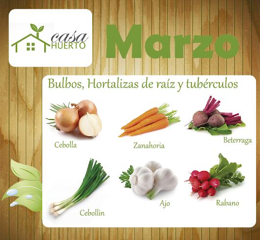 Gonzalo contreras google for Plantas hortalizas ejemplos