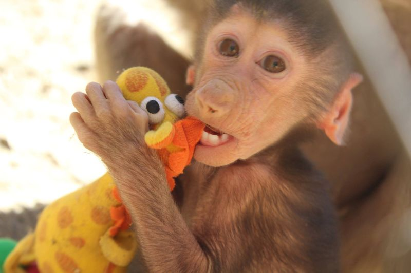 Baby Animals: Baboon infant 11