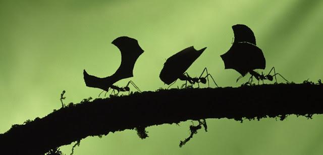 Hormigas y hojas