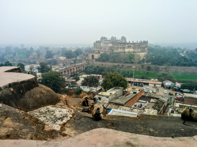 Langurs and Orchha Fort as seen from Chatturbhuj temple