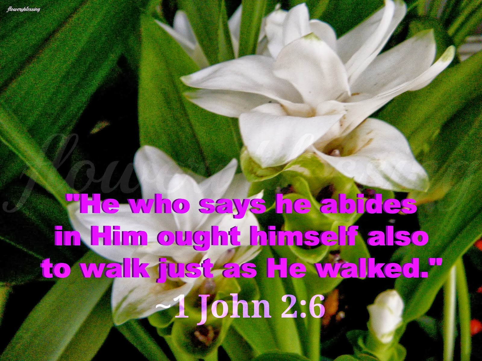 flowery blessing he who says he abides in him ought himself also