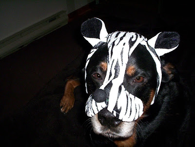 zebra dog costume - turtlesandtails.blogspot.com