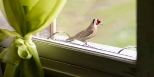 05 vdeos de flagrantes de vizinha nua na janela!
